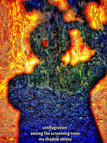 conflagration: haiga (poem and photograph) by Mark Meyer