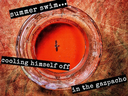summer swim, haiga (poem and photograph) by Mark Meyer