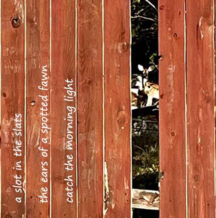 Hey! [haiga]: poem by Gary S. Rosin and photo by Katherine Durham Oldmixon