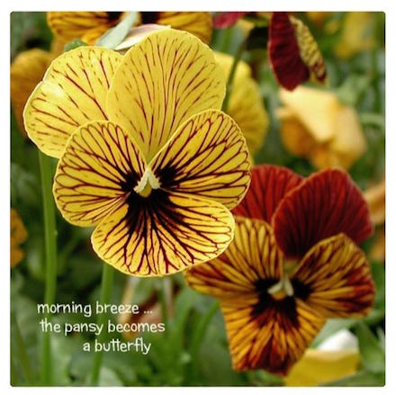 morning breeze: photo and haiku by Carol Raisfeld